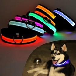 Collier lumineux pour chat et chien