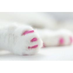 20 protège-griffes pour chats